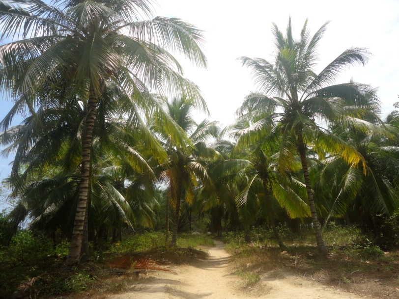Palm lined trail in Tayrona